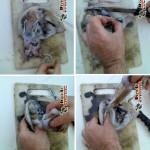 نحوه پاک کردن ماهی در خانه