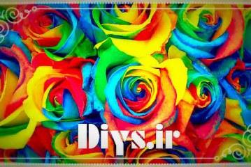آموزش تصویری روش تولید گل رز رنگین کمان