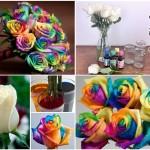 پرورش رز هفت رنگ