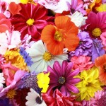 زیباترین گل های ایران